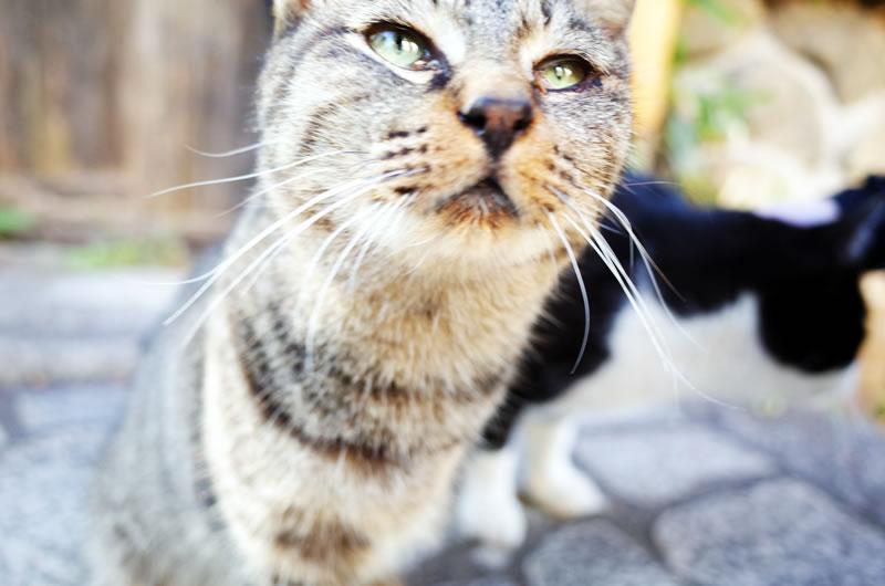鞆の浦で猫と出会う