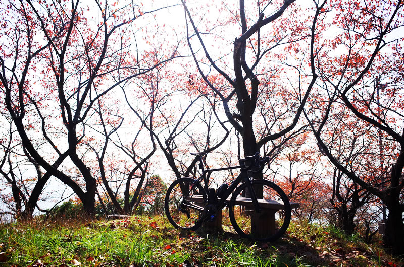 頂上からちょっと下ったところにある桜の名所