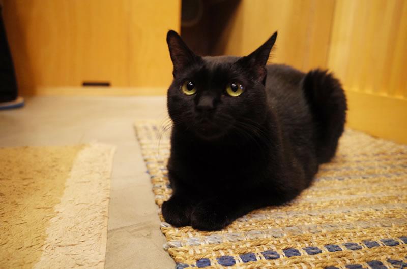 猫店員の熱心な本紹介にタジタジ