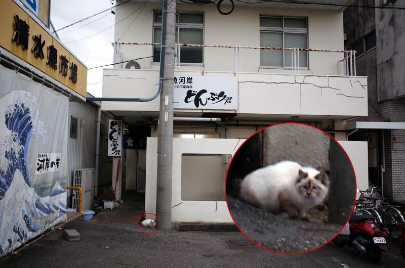 漁港に行けば猫にも会える!