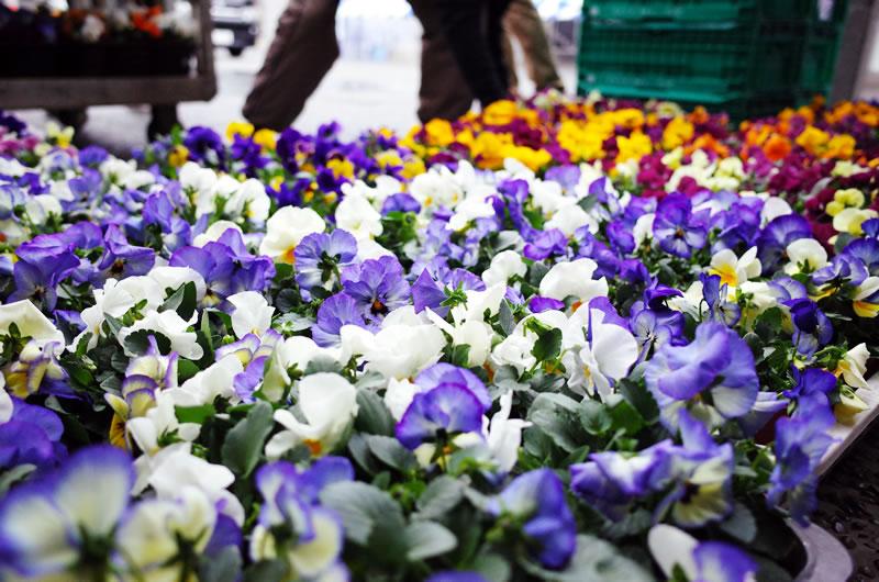 参加賞で花がもらえる!!