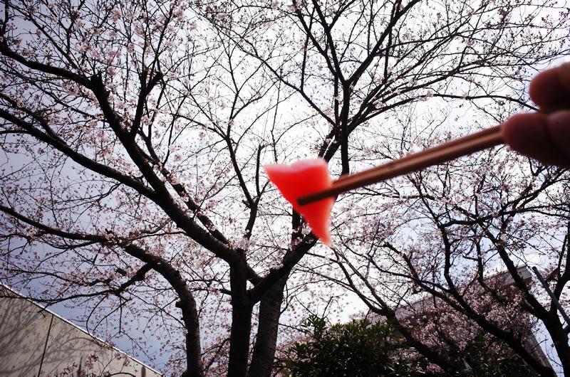 まぐろと桜