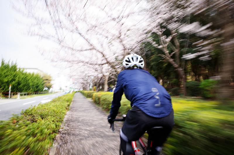 桜並木の下をのんびりお花見サイクリング(*´ω`)