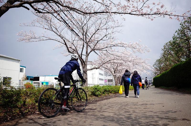グルメに桜に、大満足の久々リアルロードバイクライフでした(*´ω`)
