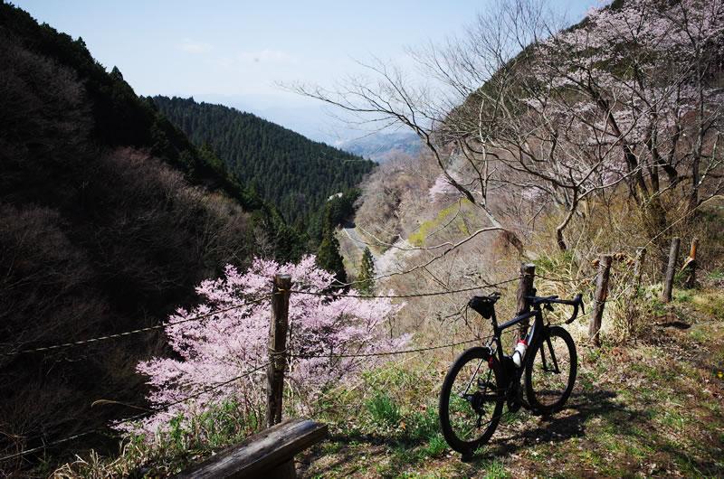和田峠の裏ももうすぐ桜が満開に