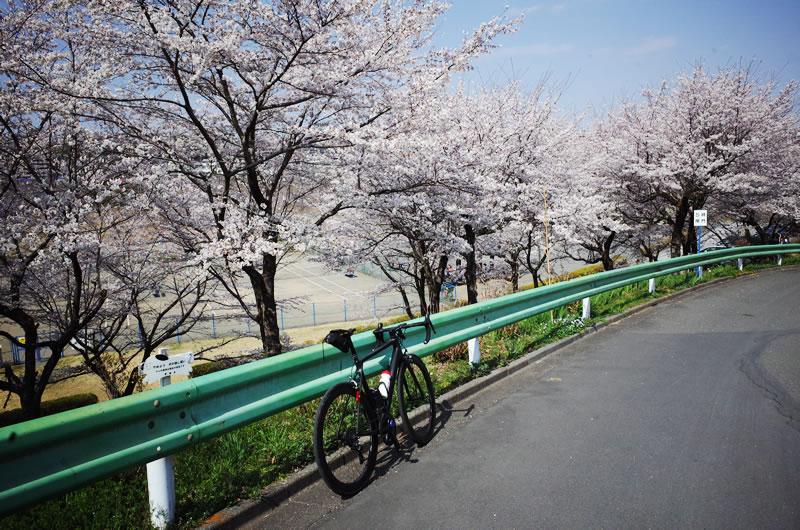 吉野街道の桜が満開!