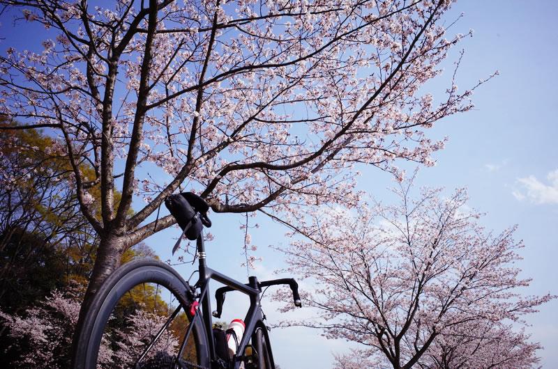 和田峠お花見ポタリングに行ってきた