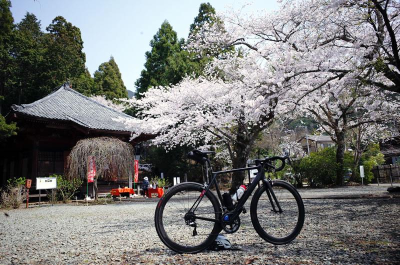 蓑毛バス停の宝蓮寺は桜の名所