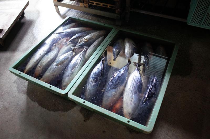 沖縄の人はお魚食べないの??