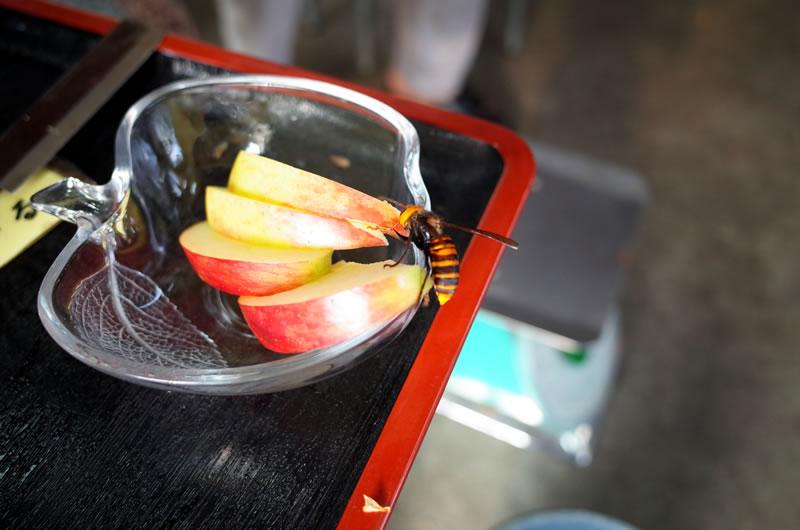 ジューシーなりんごに、スズメバチも首ったけ