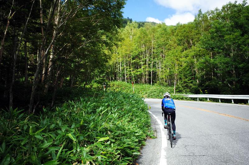 標高1800mで、森林限界が近い感じが漂っています