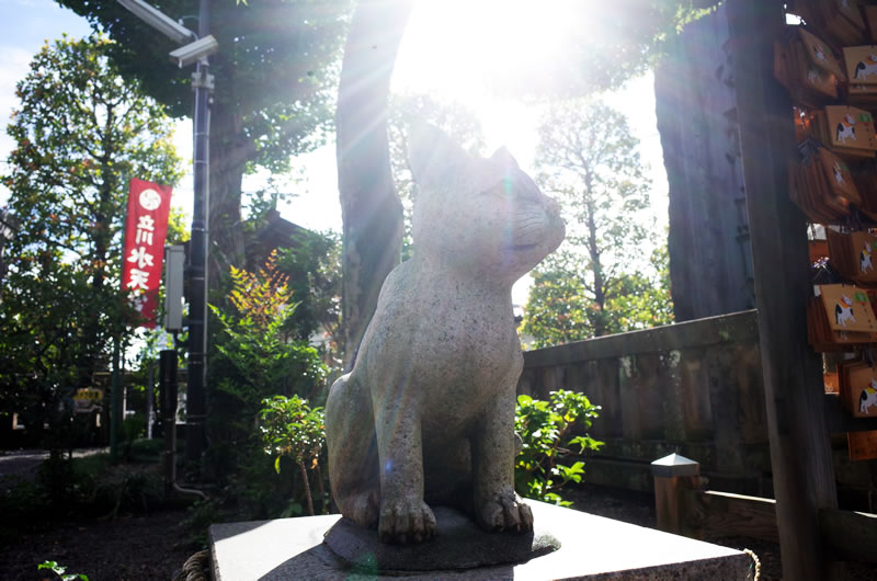 猫返し神社の狛猫を発見!