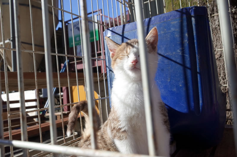 榎本牧場のネコ、幸せそう(*´ω`*)