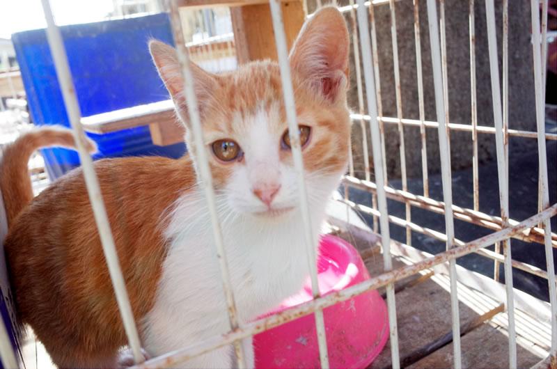 こちらは榎本牧場のアイドル猫