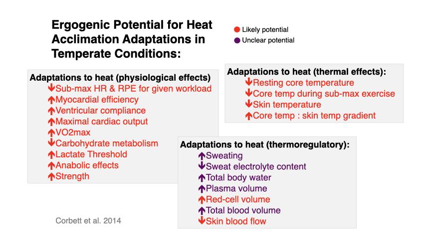 暑熱順化トレーニングの効果