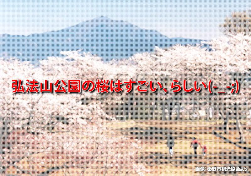 弘法山公園の桜はすごい!! らしい・・・